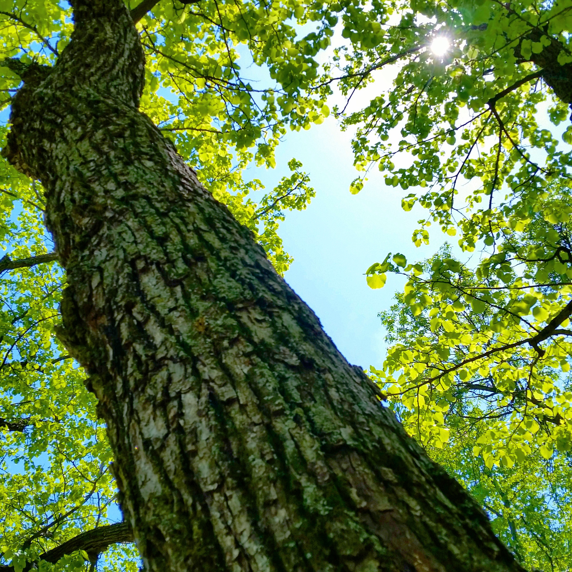 Tree Inventory Available - Grant Conservation District - South ...